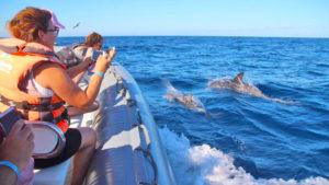 Delfine begleiten ein Boot während der Delfin-Tour auf Fuerteventura.